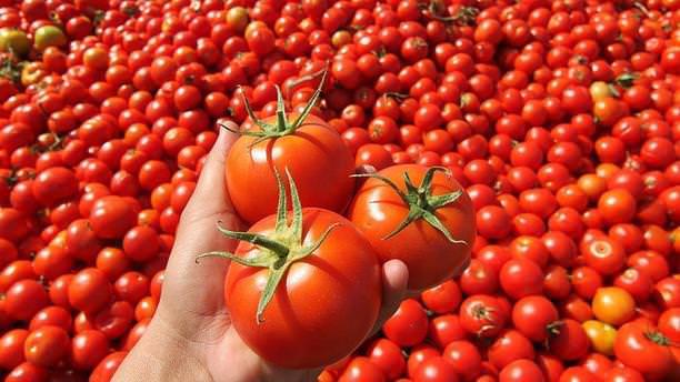 Temmuzda en fazla domatesin fiyatı arttı