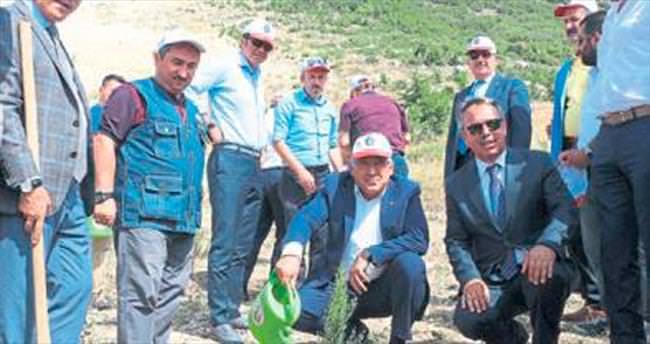 Mermer ocağı 122 bin fidanla yeşillenecek