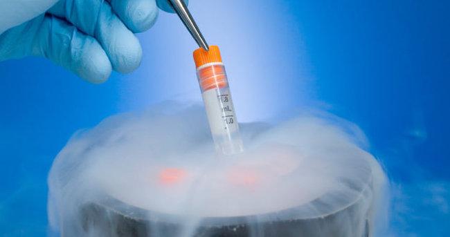 Tüp bebek merkezindeki embriyolar nakledildi