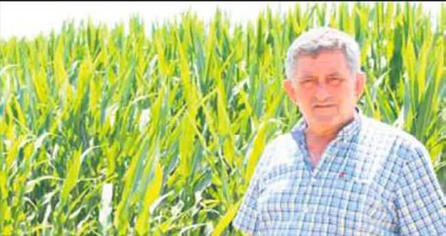 Şekerlik mısır ekimi artıyor