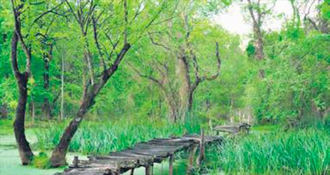 Karacabey'de 'Ihlamur Kokulu Günler' başladı