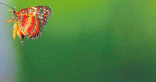 Renkli kanatlar turizme açılıyor