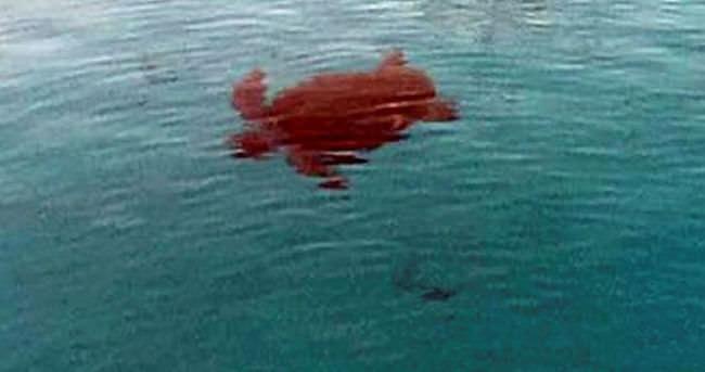 Orak Adası'nda caretta caretta saldırısında 5 kişi yaralandı
