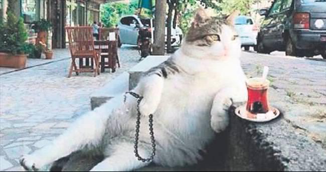 İşte fenomen kedi Tombili'nin hikâyesi