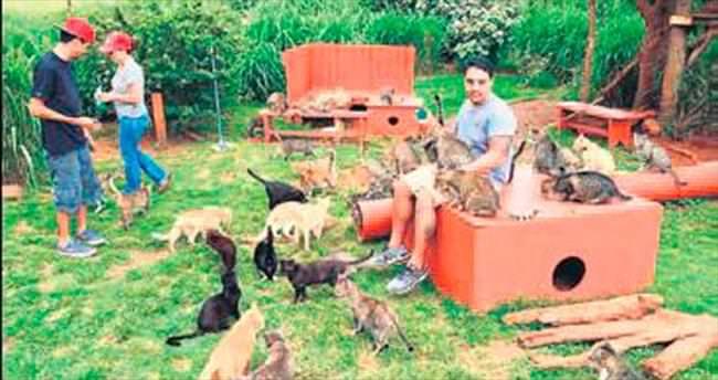 Hawaii'de 500 kedilik barınak