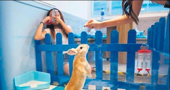 Terk edilen tavşanlar bu kafede buluştu!