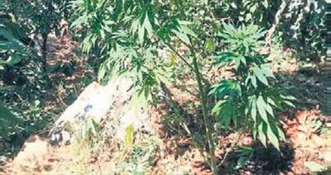 Jandarmadan uyuşturucu baskını