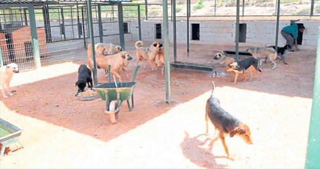 İlçelerdeki hayvanlar koruma altına alındı