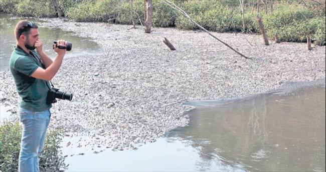 Bolu'da toplu balık ölümleri korkuttu