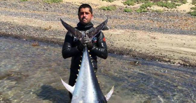 20 metre daldı 130 kiloluk orkinos avladı