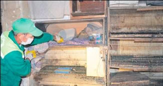 Evdeki civcivleri zabıta ekibi topladı