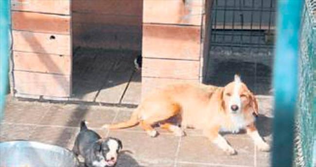 Köpekleri fıskiyeli serinleme