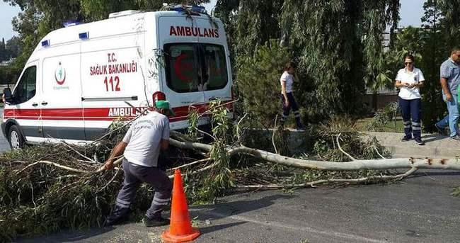 Şiddet gördü, hastaneye götürülürken üzerine ağaç devrildi
