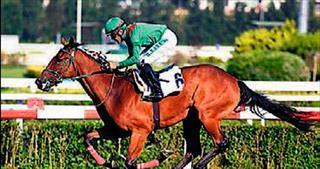 Milyon dolarlık atlar Veliefendi'de