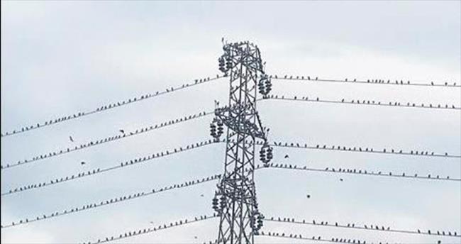 Göçmen kuşlara yuva