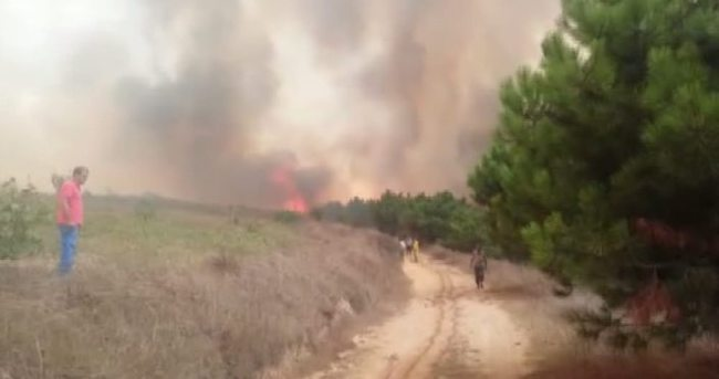 Çatalca'da orman yangını