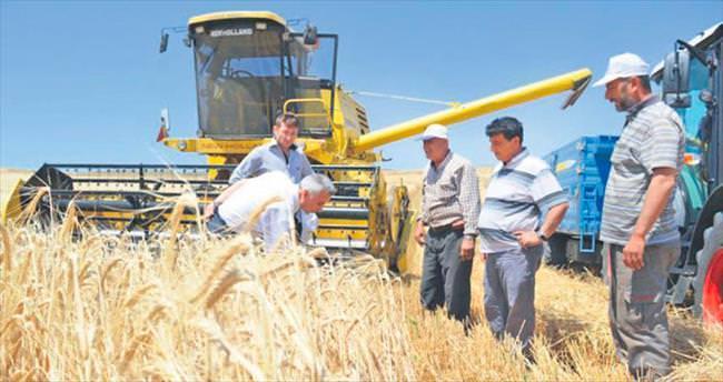 Hububatta rekolte yüzde 20 yükseldi, çiftçinin yüzü güldü