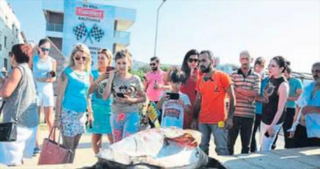 İzmir'de sahile Caretta Caretta vurdu