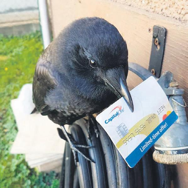 Postacıların belalısı