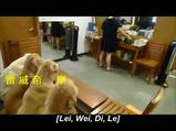 Yemekten önce dua eden köpekler
