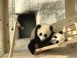 Pandaların kaydırak keyfi