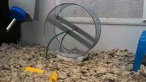 Bu hamster olayı çözmüş