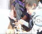 Anneleri ölen köpek yavruları sahipsiz kalmadı