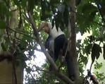 Ağaçta mahsur kalan yaşlı adam