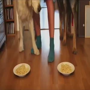 Golden ve Alman köpeği yarışırsa