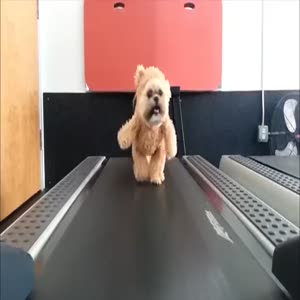 Köpeğe oyuncak ayı kostümü giydirdiler