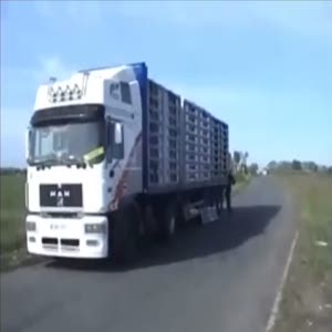 Bir kamyon dolusu kuşun özgürlük anı
