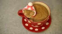 Çay bardağını mesken edinen sevimli kedi
