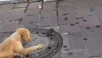Köpeğin fare ile oyunu izleyenleri şaşırttı