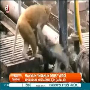 Maymundan raylarda kalp masajı