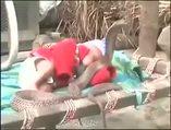 Dev kobra uyuyan bebeğin başında nöbet tuttu