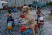 Çocukların eğlencesine ortak olan sevimli golden