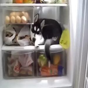 Buzdolabında uyuyan köpek