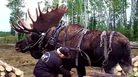 Dünyanın en büyük 10 hayvanı