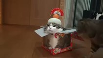 Oyuncak rolü yapan yavru kedi
