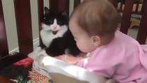 Bebeği yavrusu gibi yalayan kedi