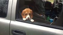 Otomobilin camından bakan köpeğe komik şaka