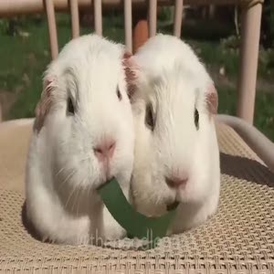 Sevimli hamsterlar ortada buluşuyor