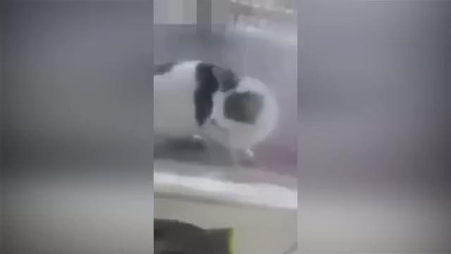 Vicdansız adam kediye kaynar su döktü