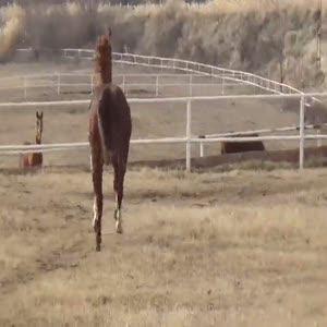 İşte Türkiye'nin en çok kazandıran atı