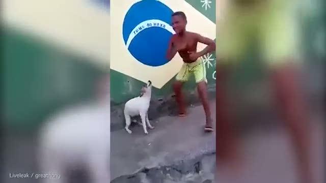 Dans eden köpek kırdı geçirdi