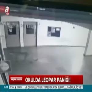 Leopar okul koridorunda