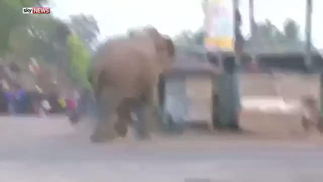 Kızgın fil köyü yıktı