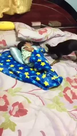 Uyuyan bebeğin üzerini örten düşünceli köpek