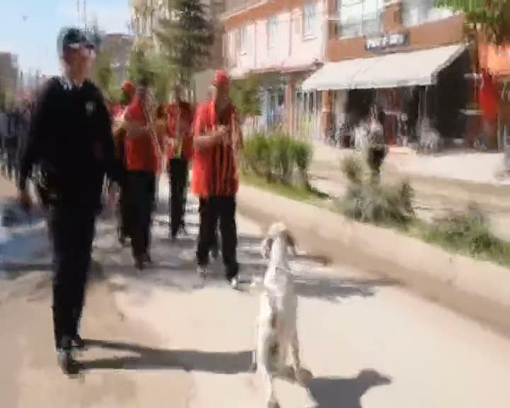 Bandoya eşlik eden köpek