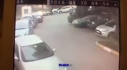 Sokak köpeğini demir çubuklarla dövdü!